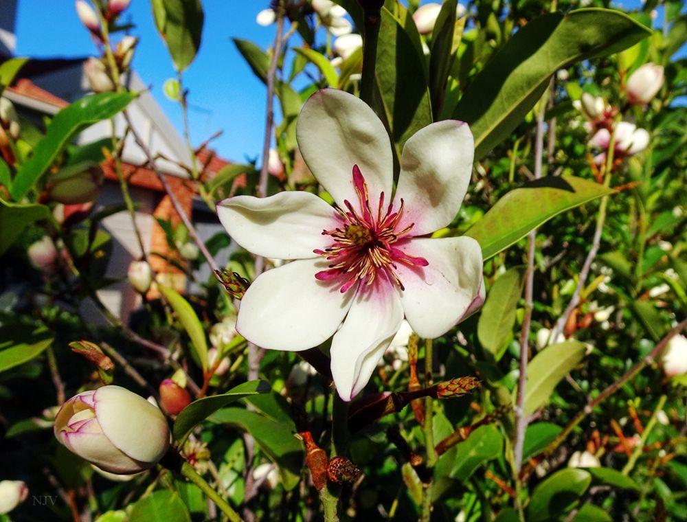 花卉日记-68_图1-20