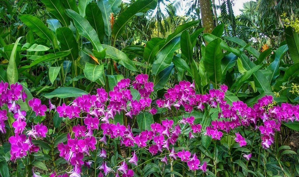 花卉日记-68_图1-22