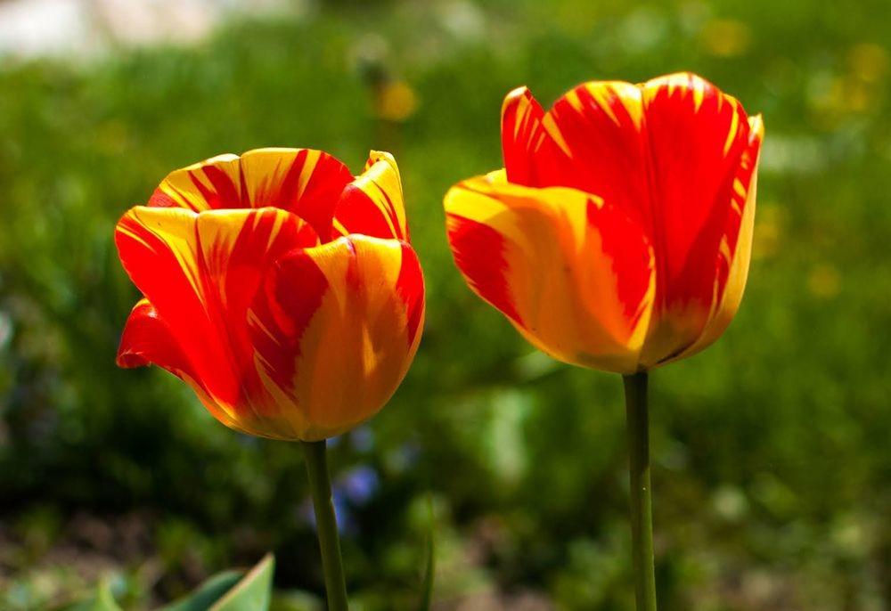 花卉日记-68_图1-23