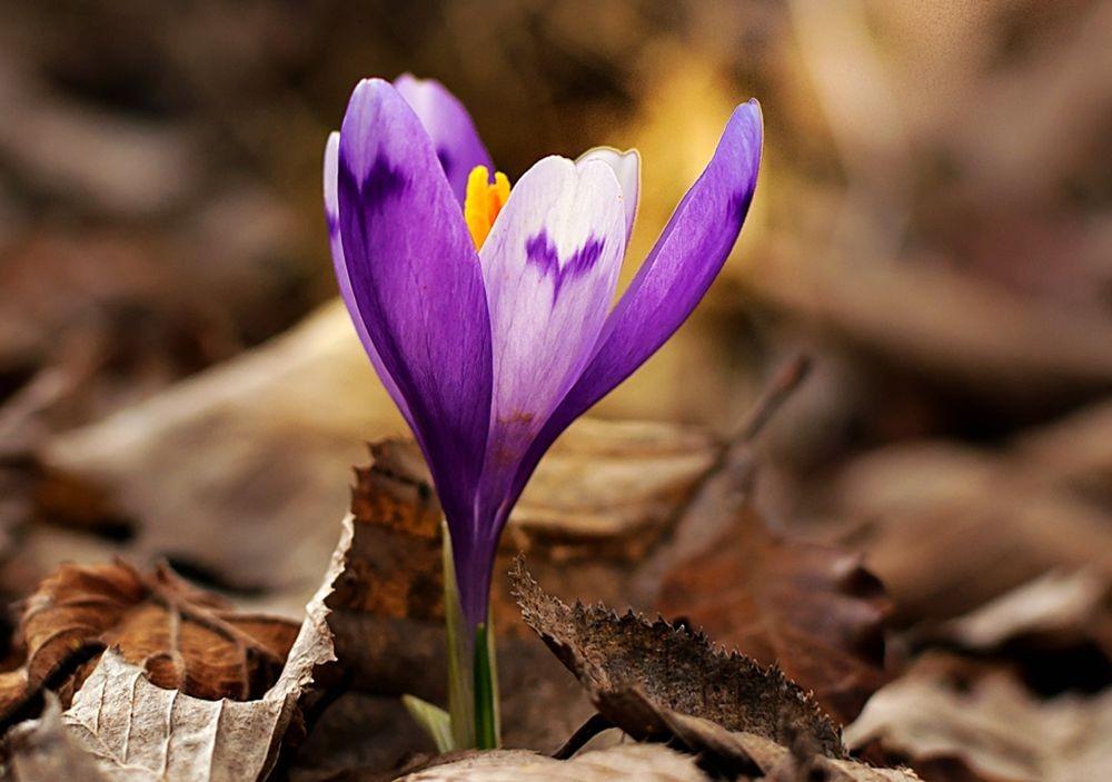 花卉日记-68_图1-25