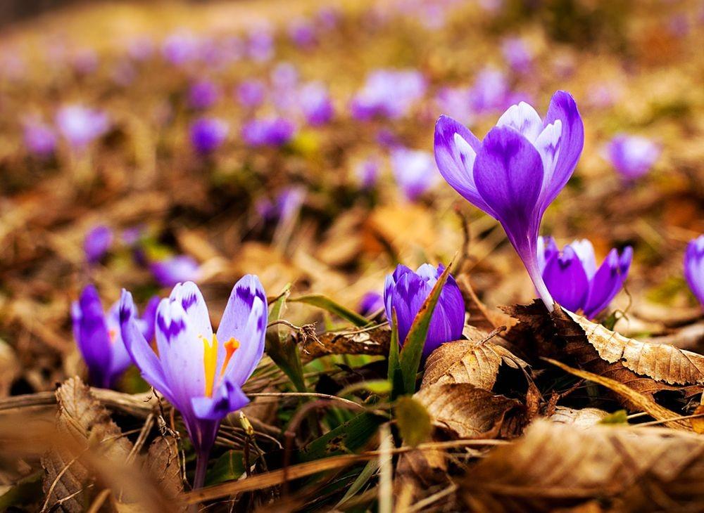 花卉日记-68_图1-26