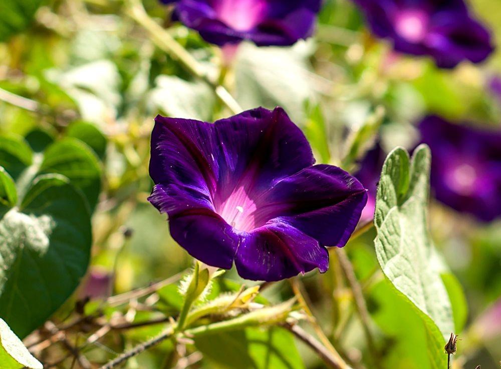 花卉日记-69_图1-10