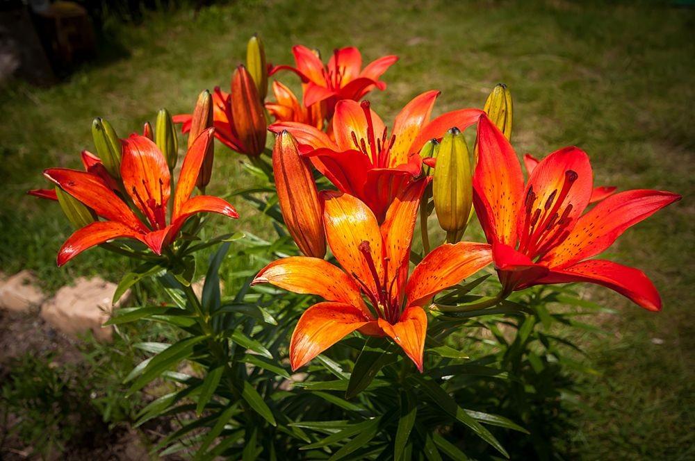 花卉日记-69_图1-14