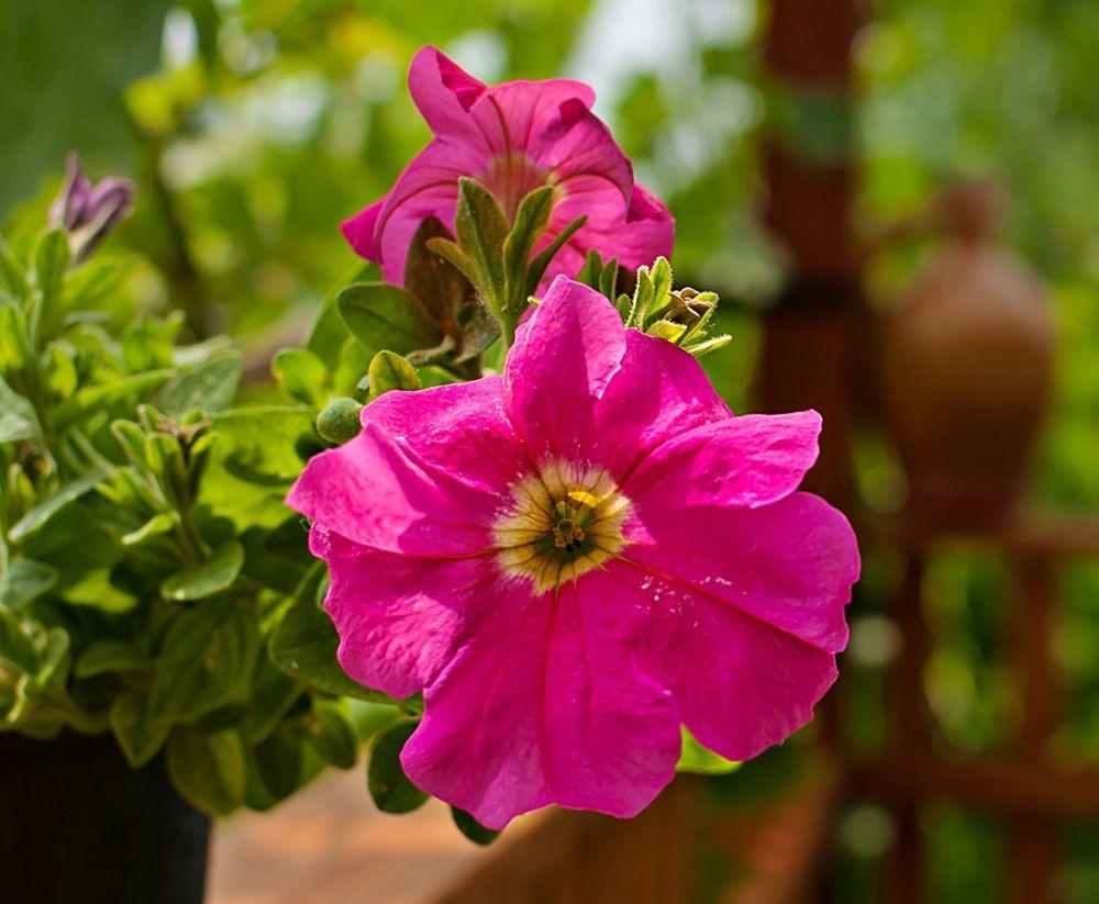 花卉日记-69_图1-15