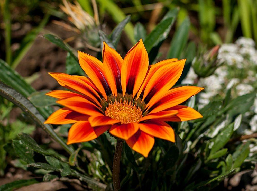 花卉日记-69_图1-17