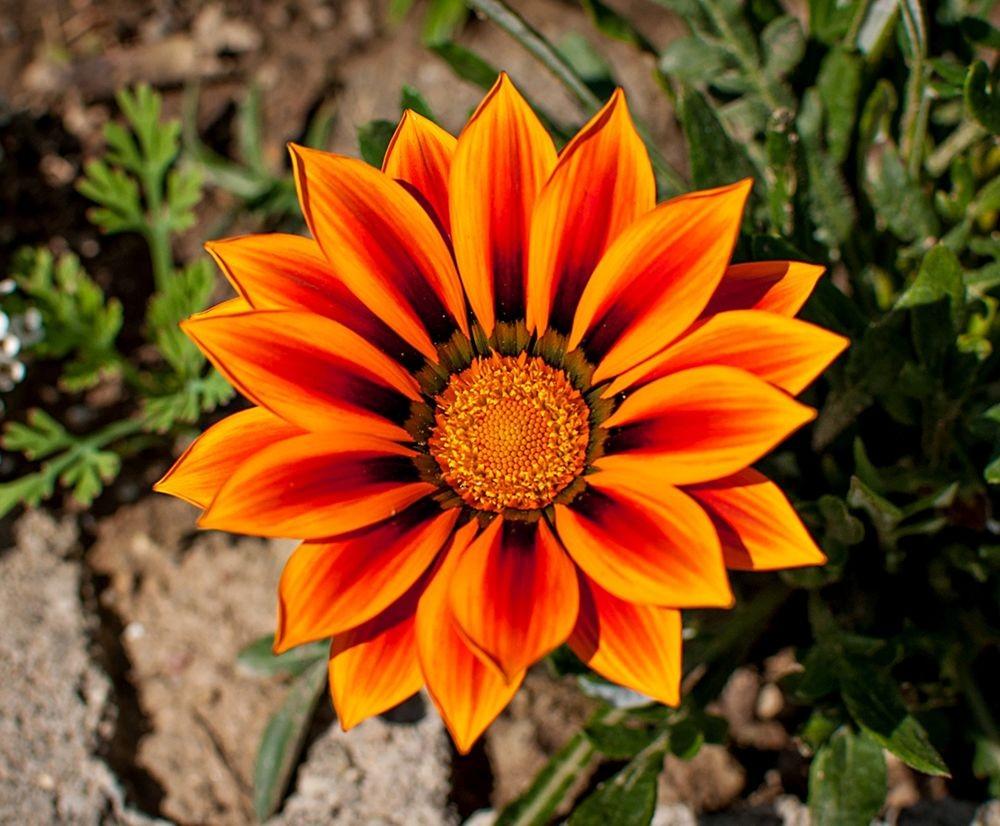 花卉日记-69_图1-18