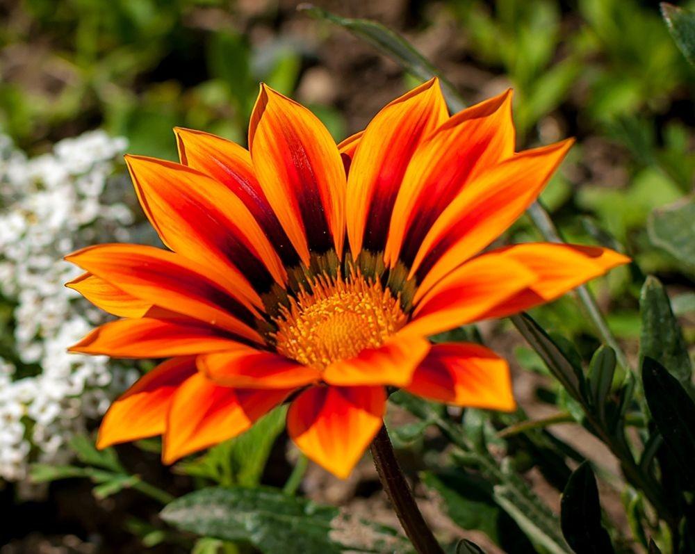 花卉日记-69_图1-19