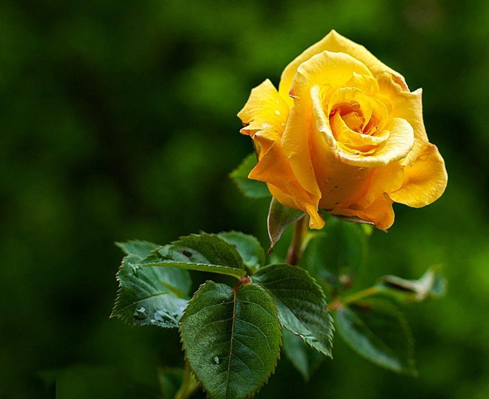 花卉日记-69_图1-20