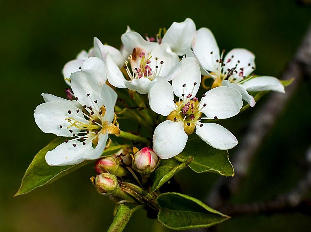 花卉日记-69_图1-22