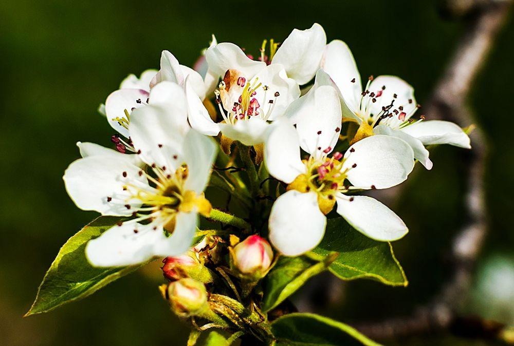 花卉日记-69_图1-23