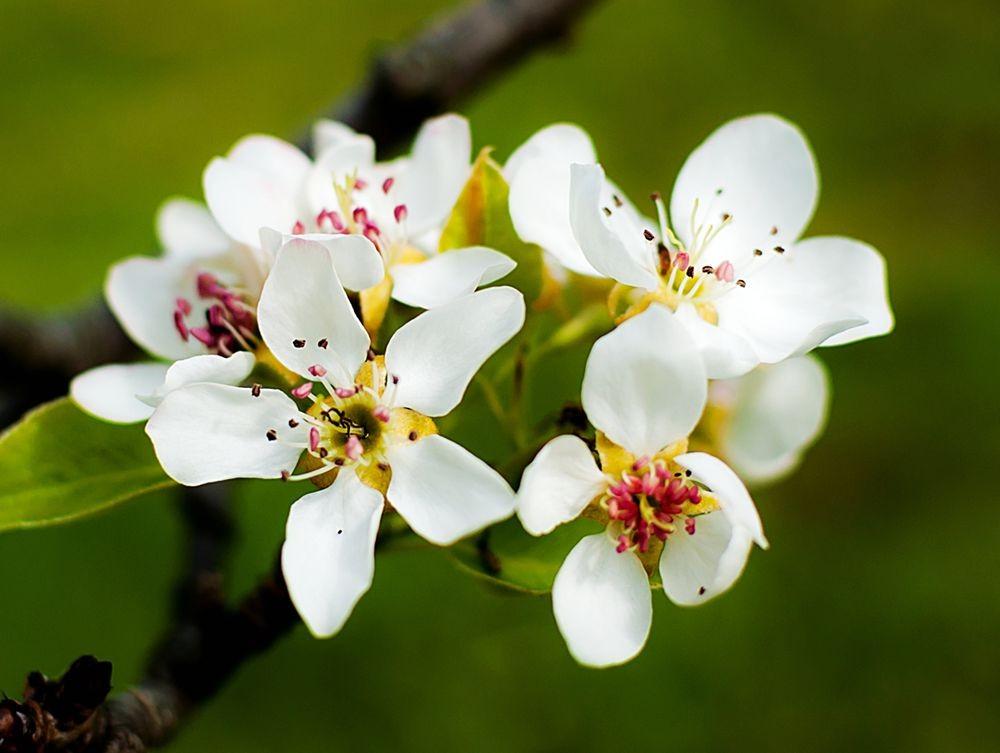 花卉日记-69_图1-24