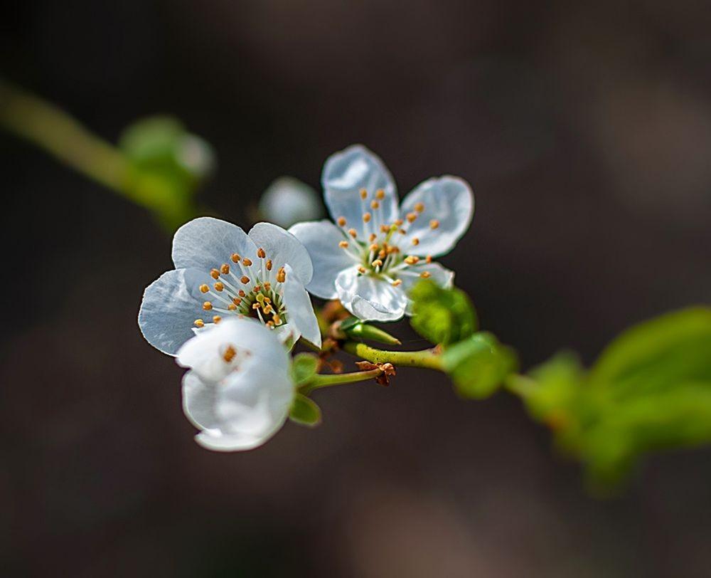 花卉日记-69_图1-25
