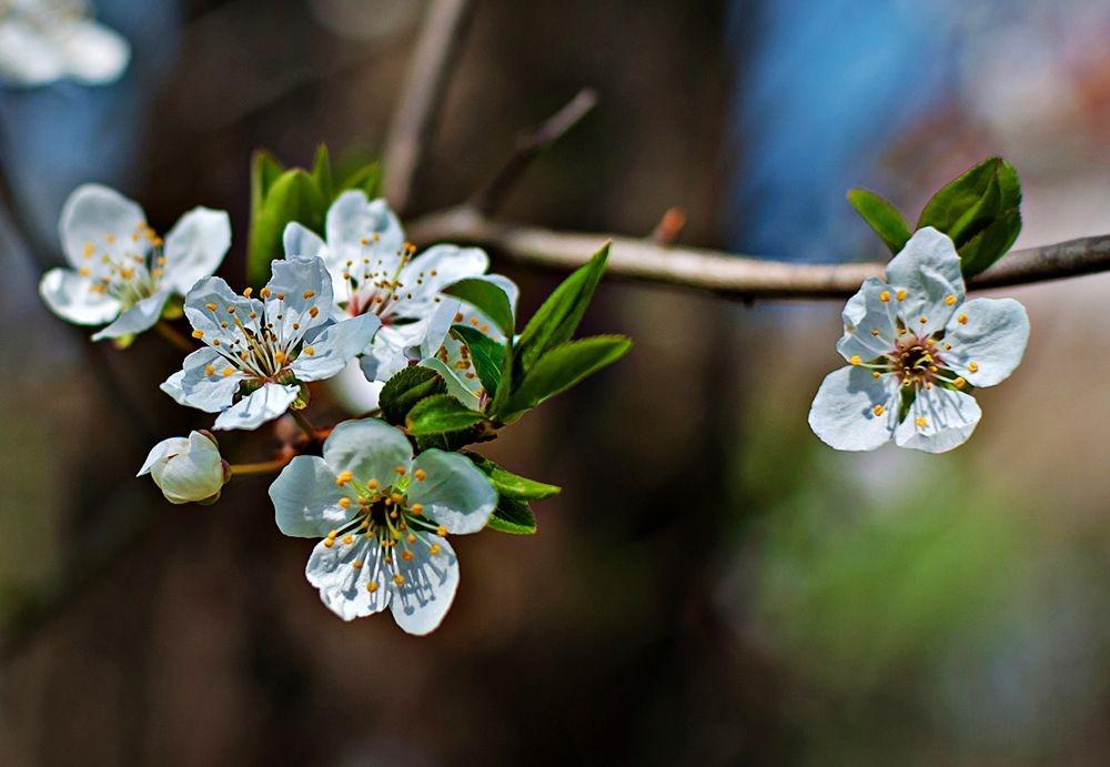 花卉日记-69_图1-26