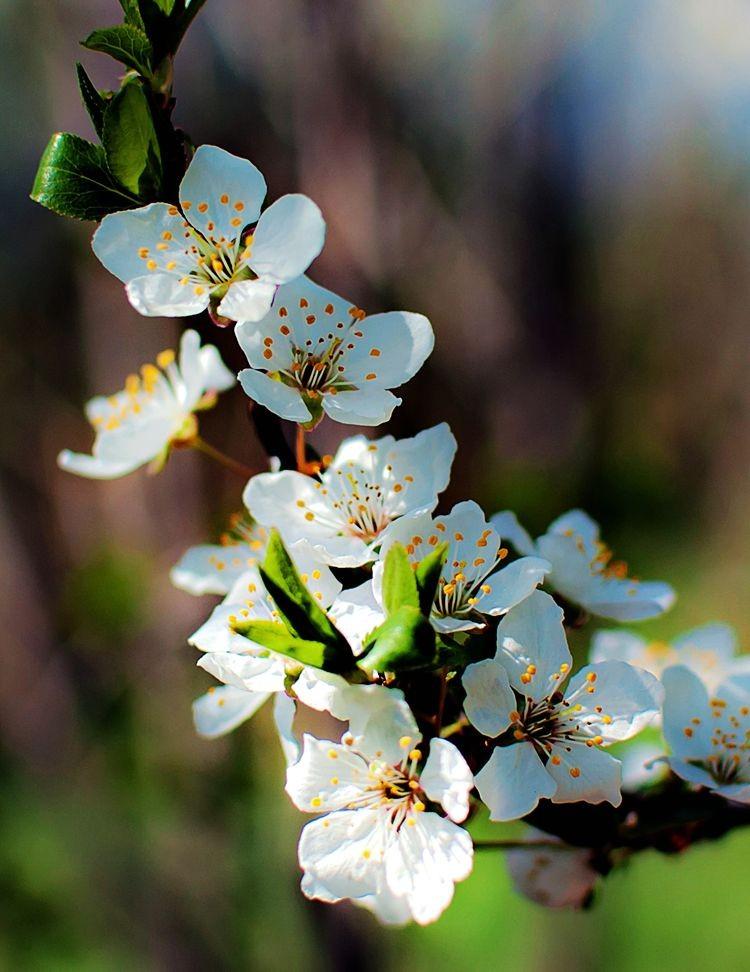 花卉日记-69_图1-27