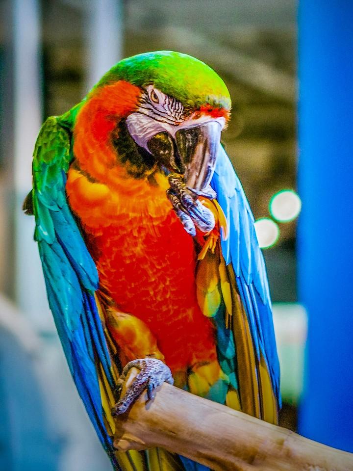 打鸟,这颜色鸟不多_图1-3