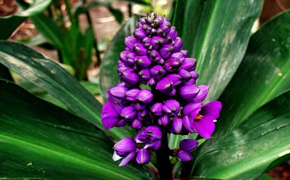 花卉日记-70_图1-4