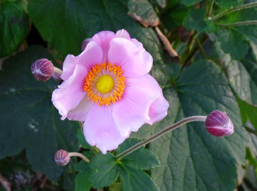 花卉日记-70_图1-6