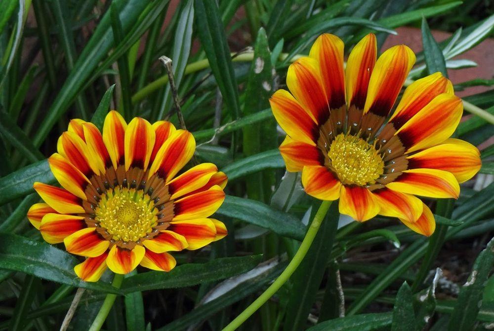 花卉日记-70_图1-8