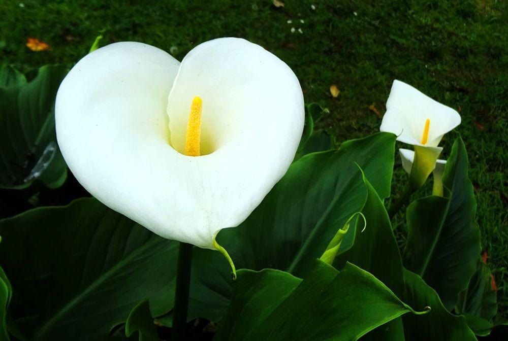 花卉日记-70_图1-9
