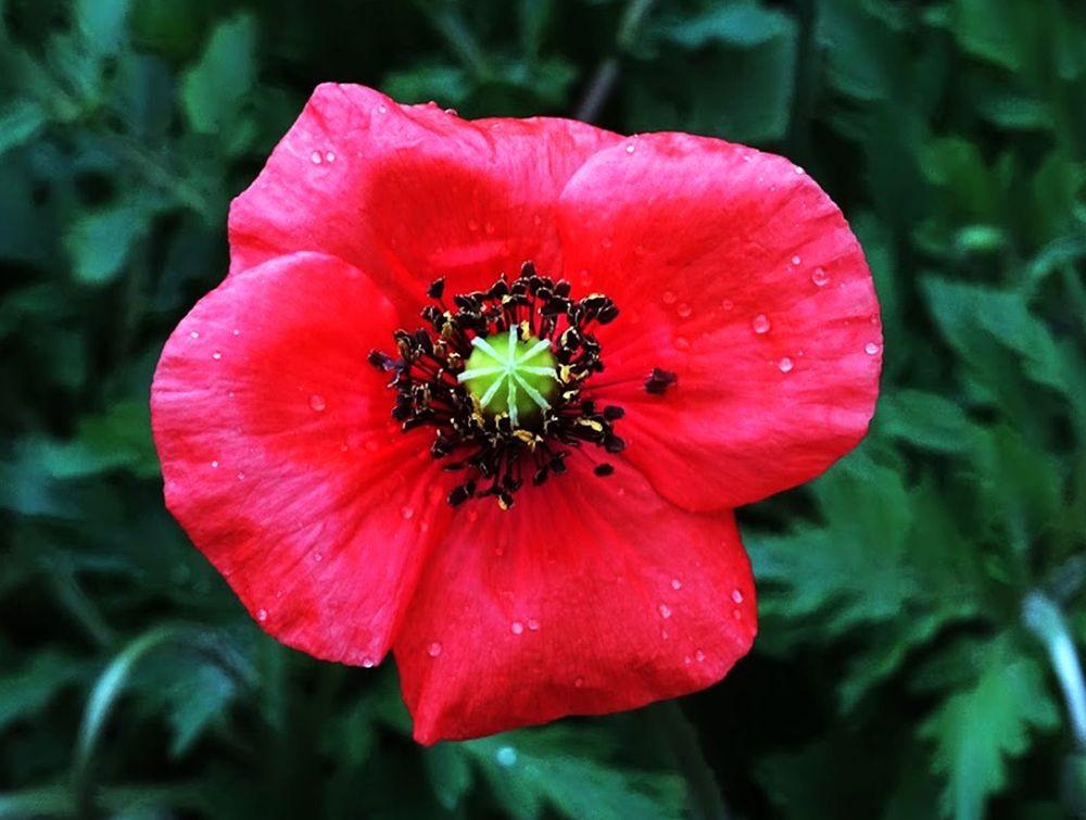 花卉日记-70_图1-10
