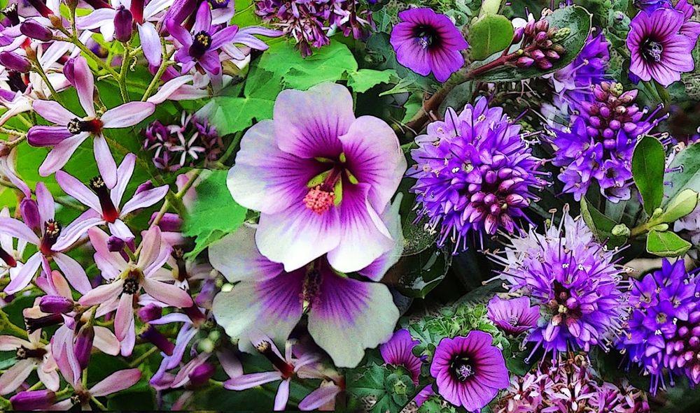 花卉日记-70_图1-13