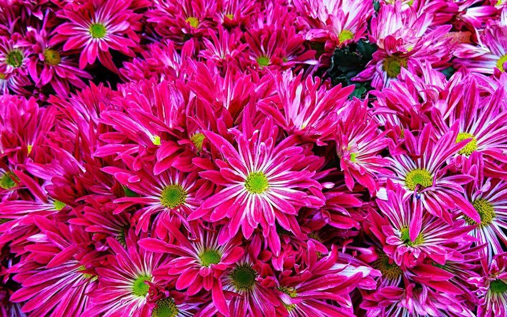 花卉日记-70_图1-17