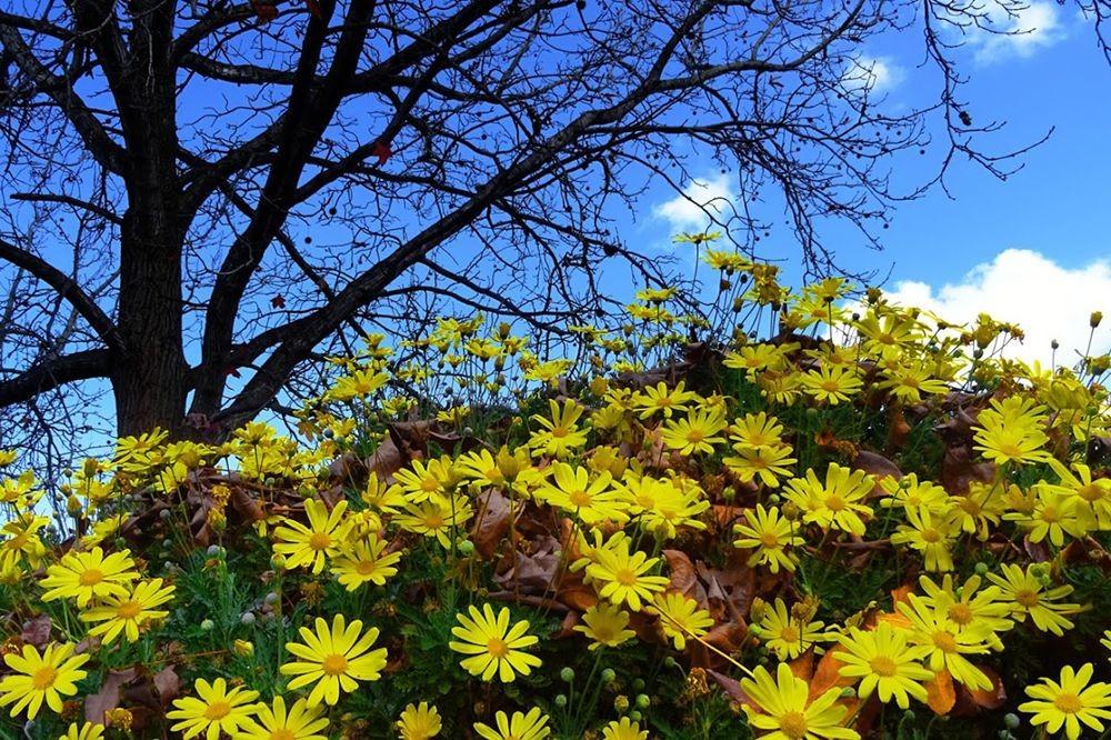 花卉日记-70_图1-18