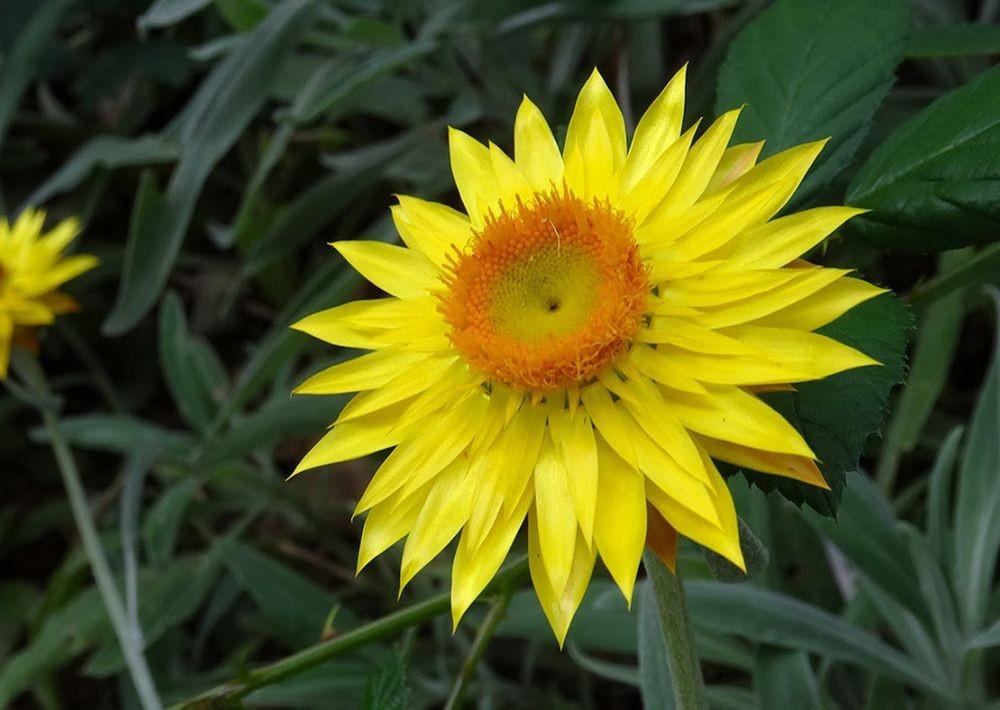 花卉日记-70_图1-19