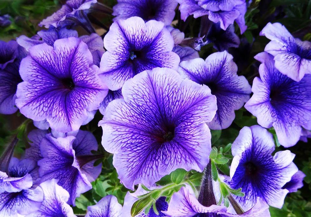 花卉日记-70_图1-20