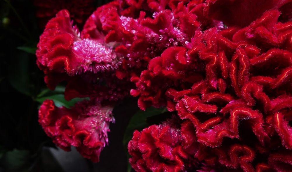 花卉日记-70_图1-23