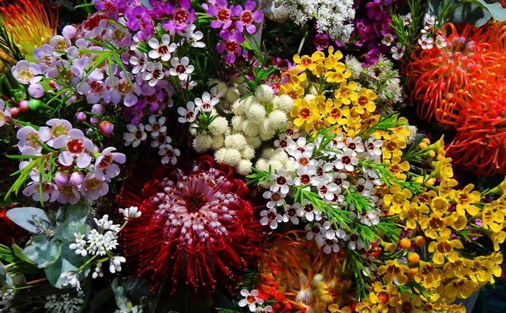 花卉日记-70_图1-24