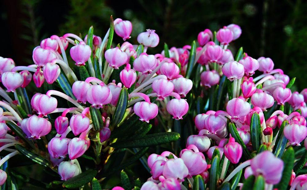 花卉日记-71_图1-2