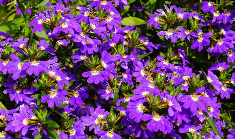 花卉日记-71_图1-3