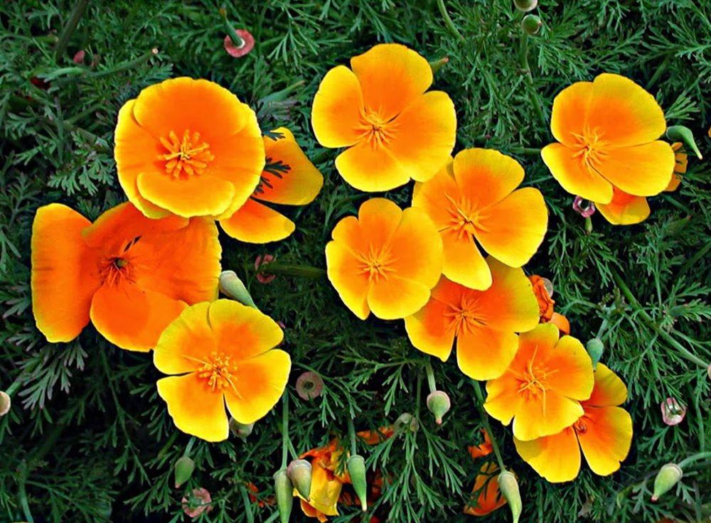 花卉日记-71_图1-4