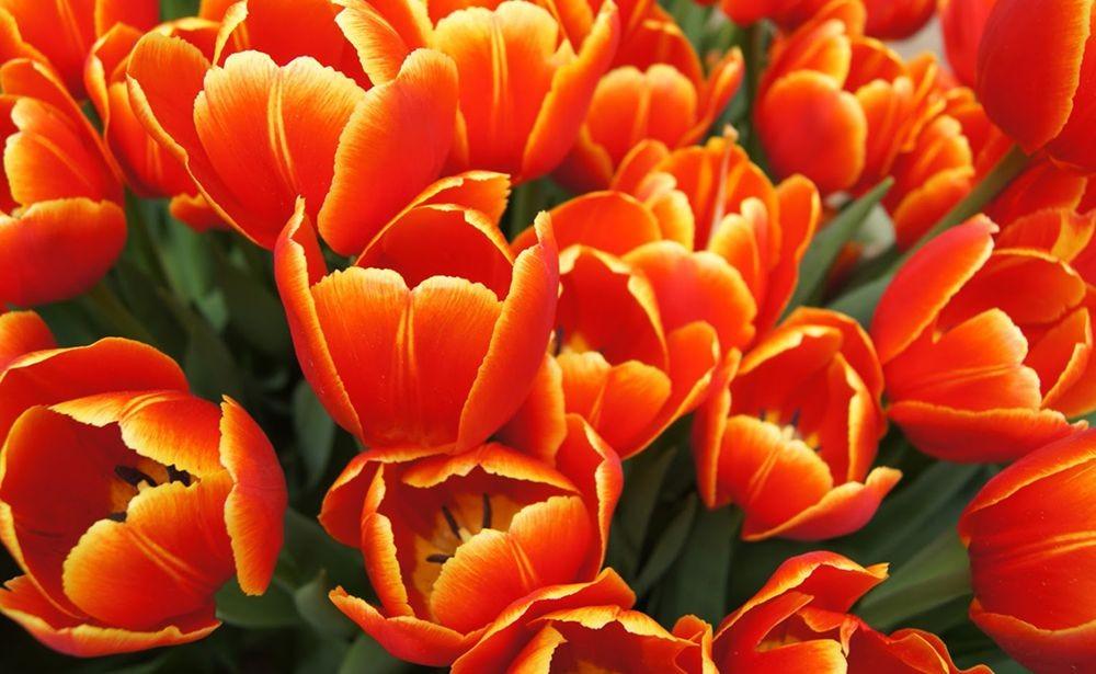 花卉日记-71_图1-6