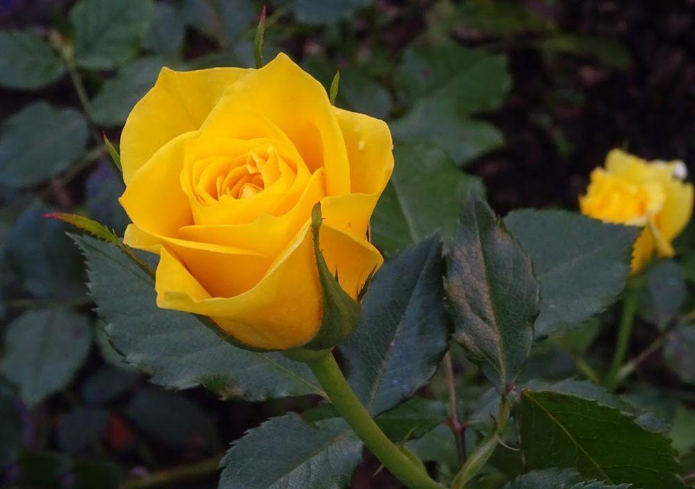 花卉日记-71_图1-9
