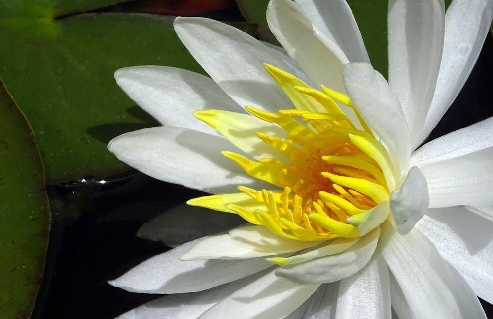 花卉日记-71_图1-12