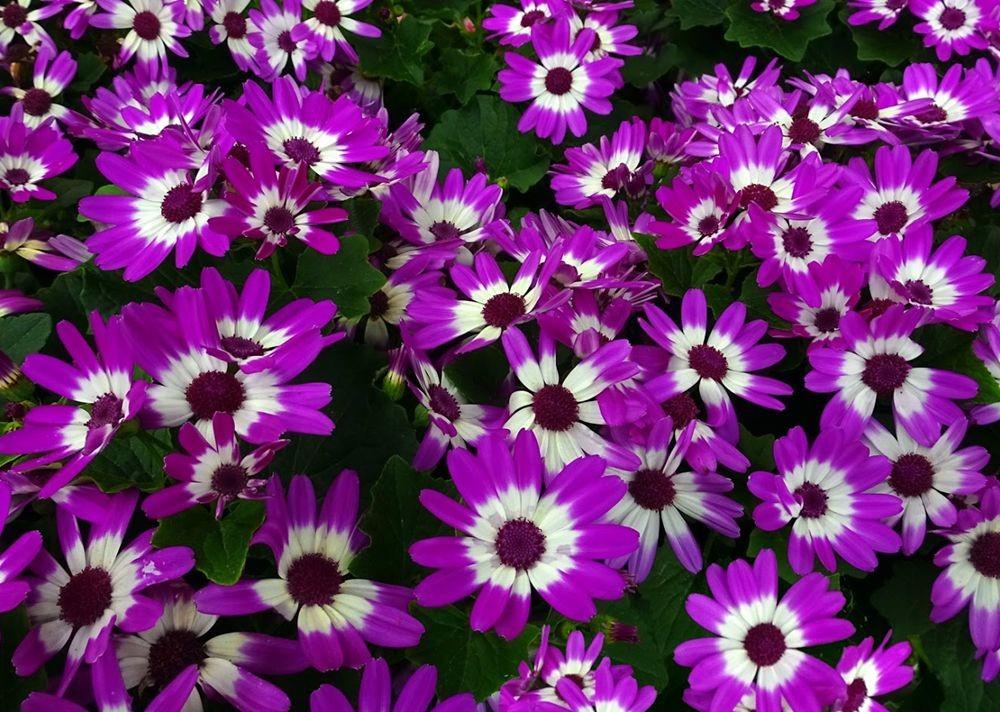 花卉日记-71_图1-13