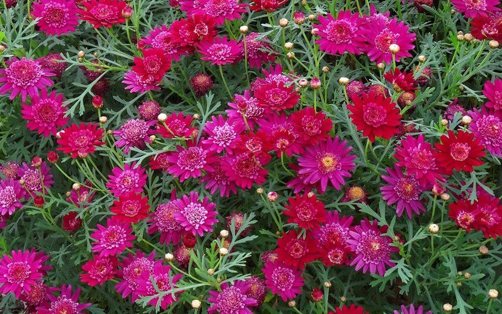 花卉日记-71_图1-14