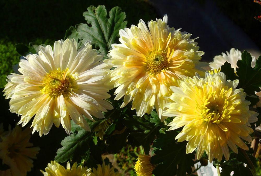 花卉日记-71_图1-18