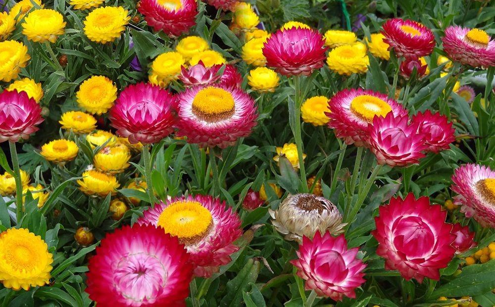 花卉日记-71_图1-19
