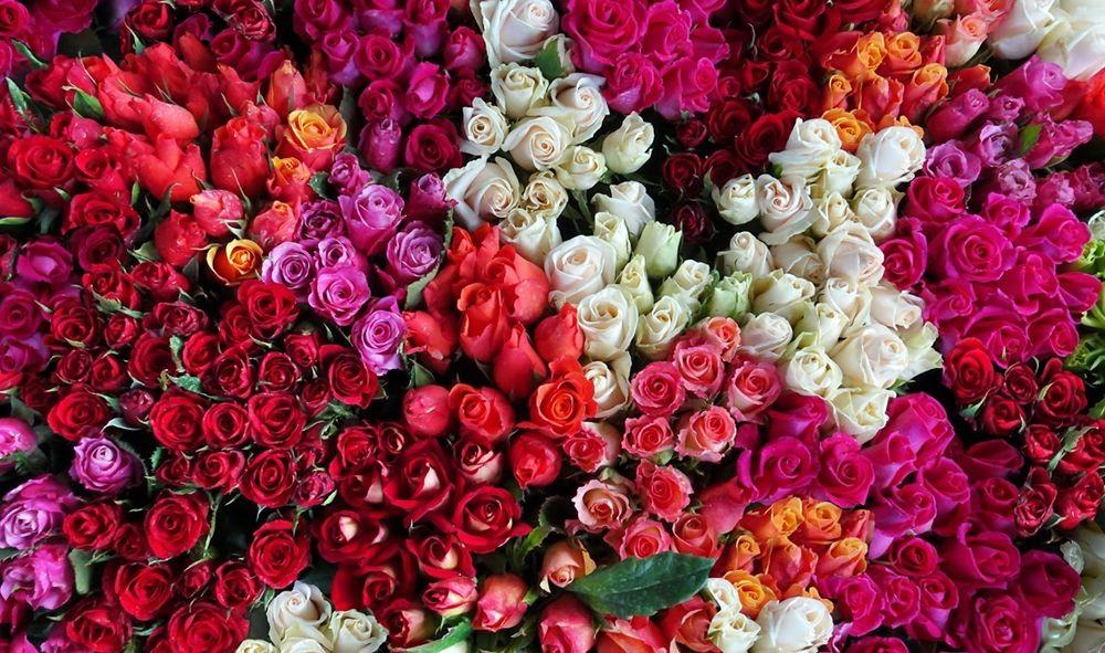 花卉日记-71_图1-20