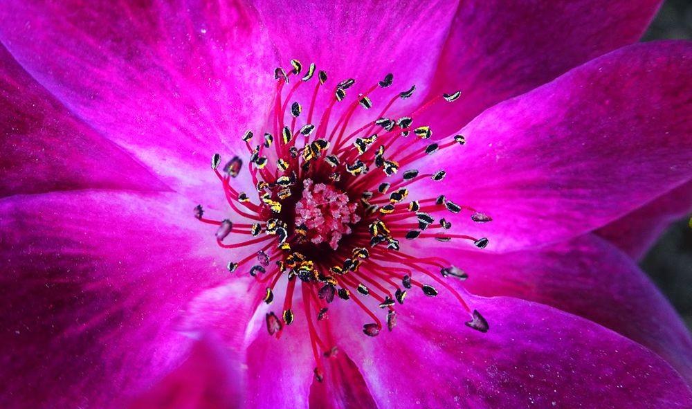 花卉日记-71_图1-21