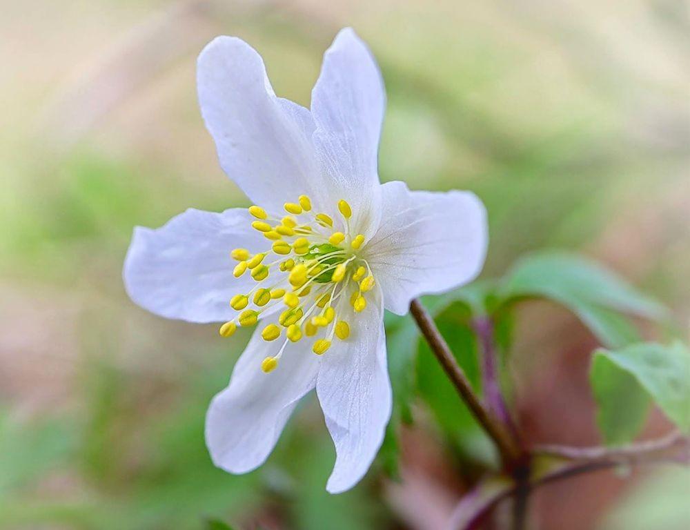花卉日记-71_图1-25