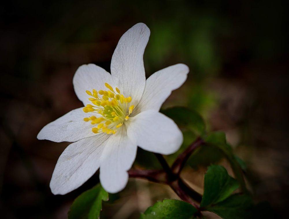 花卉日记-71_图1-26
