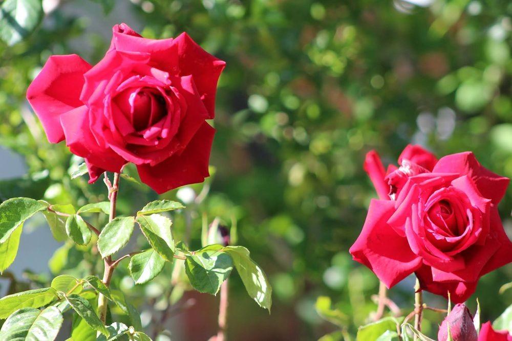 花卉日记-72_图1-2