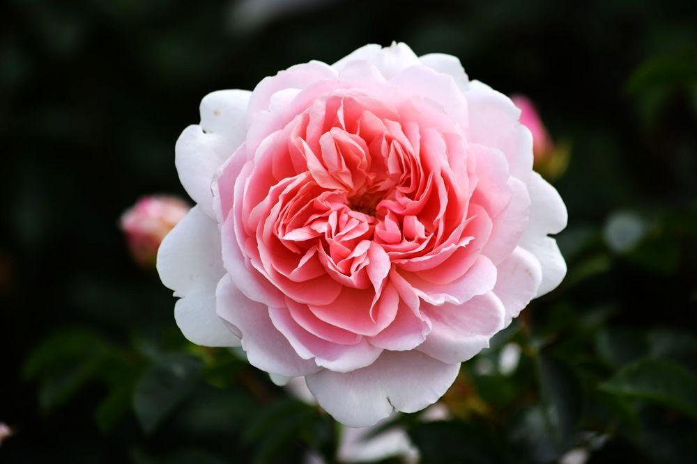 花卉日记-72_图1-7