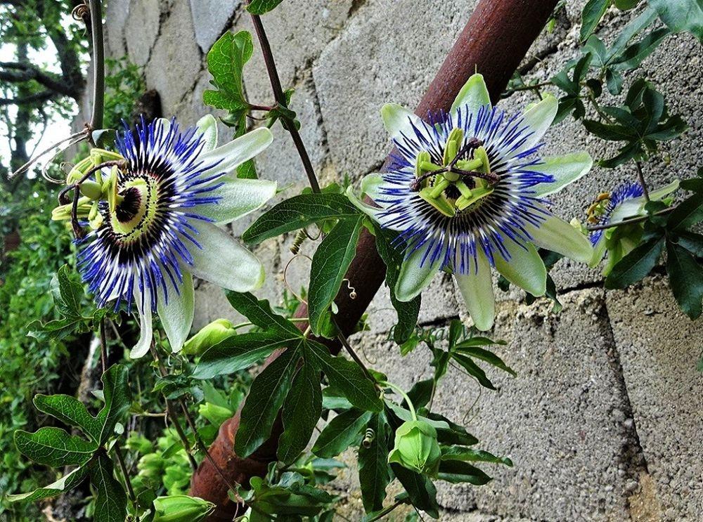 花卉日记-72_图1-12