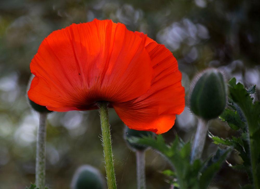 花卉日记-72_图1-13