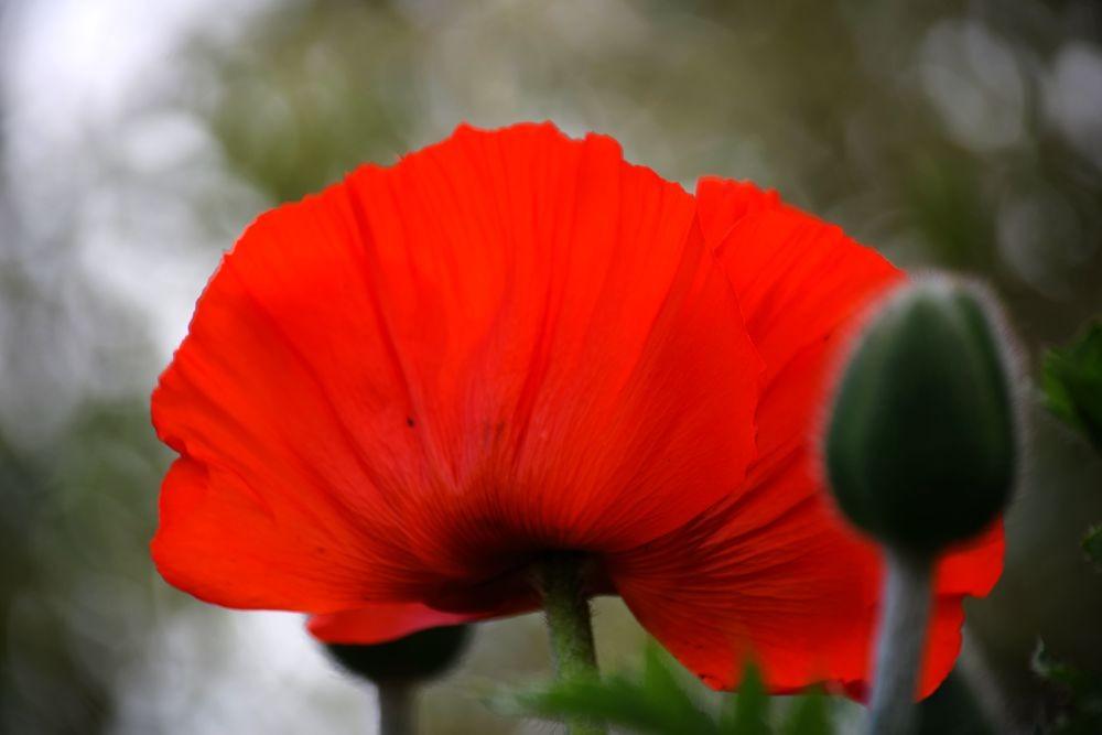 花卉日记-72_图1-14